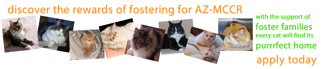 support us - foster